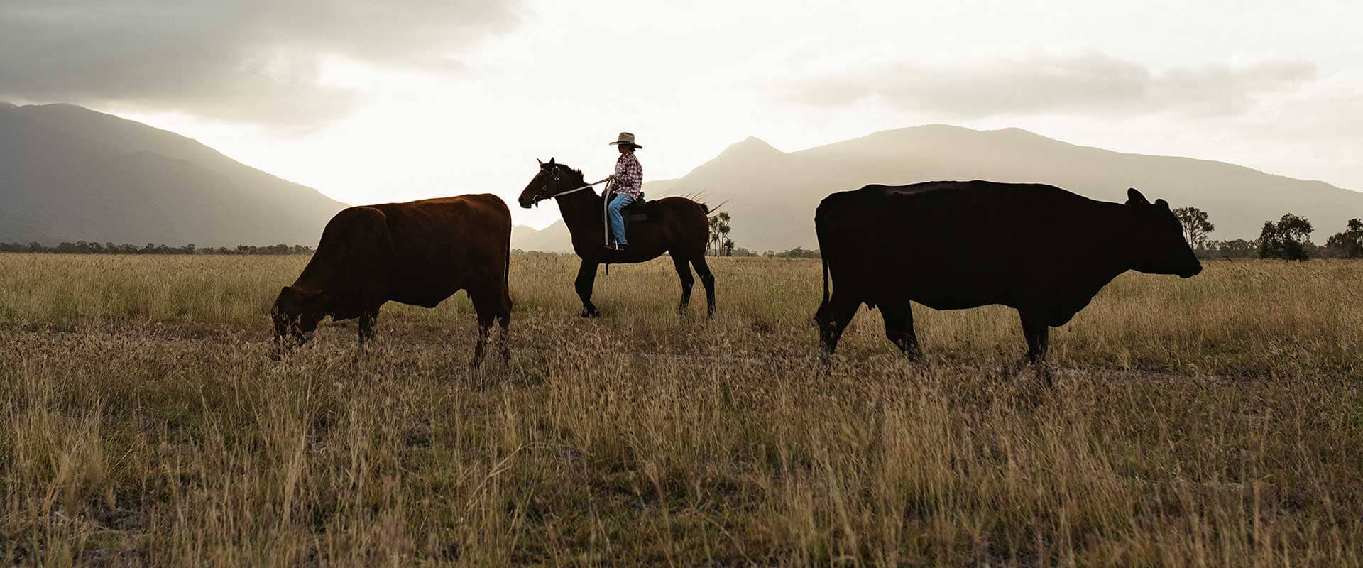 From Our Paddock To Your Plate